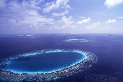 Coral Reef-Alexis Rosenfeld-Photographic Print