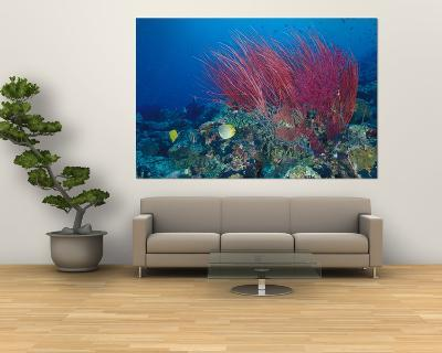 Coral Reefs, Papua, Indonesia-Michele Westmorland-Giant Art Print