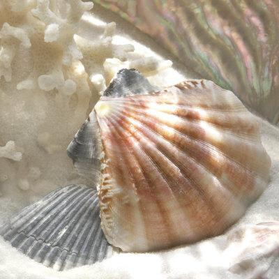 https://imgc.artprintimages.com/img/print/coral-shell-iii_u-l-f2w5ft0.jpg?p=0