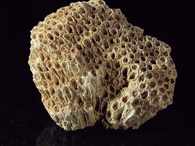 Coral Skeleton-Dirk Wiersma-Photographic Print