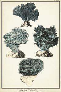 Coral Species I
