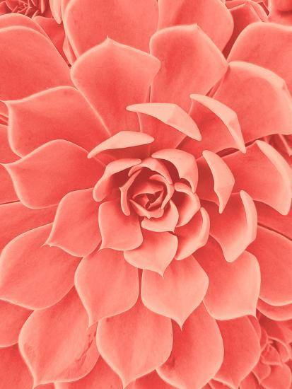 Coral Succulent-Urban Epiphany-Photographic Print