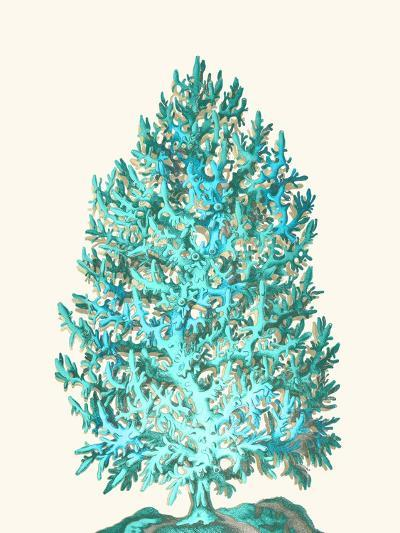 Coral Tree Turquoise on Cream-Fab Funky-Art Print