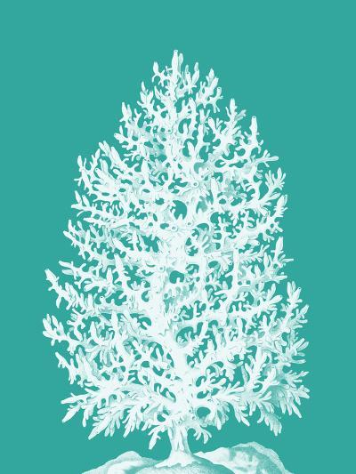 Coral Tree White on Turquoise-Fab Funky-Art Print