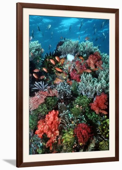 Coral Wall Komodo Marine Park Is World Famous--Framed Photographic Print