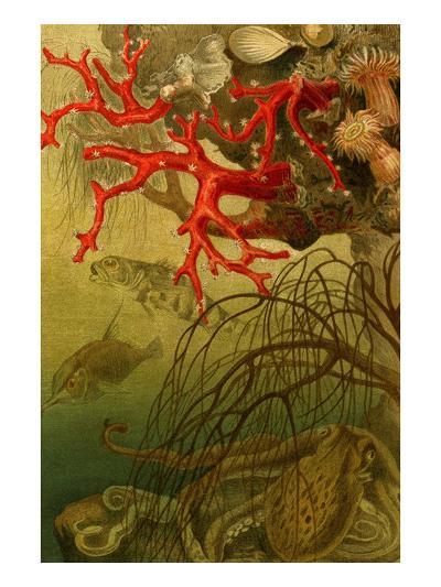 Coral-F^W^ Kuhnert-Art Print
