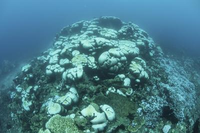 Corals are Beginning to Bleach on a Reef in Indonesia-Stocktrek Images-Photographic Print