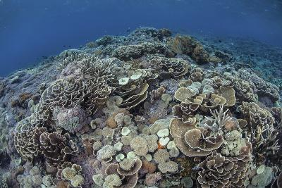 Corals Compete for Space to Grow on a Reef in Indonesia-Stocktrek Images-Photographic Print