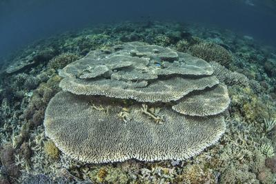 Corals Grow on a Shallow Reef in Indonesia-Stocktrek Images-Photographic Print