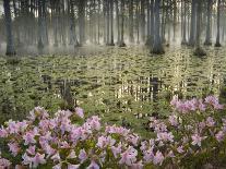 Multiple Exposure Swirl of Purple Petunias, Arlington, Virginia, USA-Corey Hilz-Photographic Print