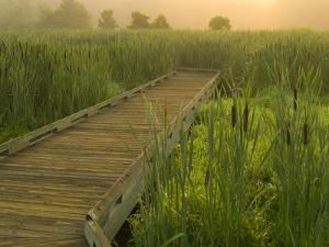 Boardwalk through cattails in fog, Huntley Meadows, Fairfax, Virginia, USA by Corey Hilz