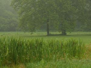 Cattails With Trees, Union Mills, Westminster, Maryland, USA by Corey Hilz