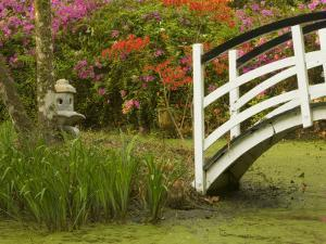 Foot Bridge in Garden, Magnolia Plantation, Charleston, South Carolina, USA by Corey Hilz