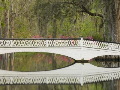 Foot Bridge with Azaleas and Spanish Moss, Magnolia Plantation, Charleston, South Carolina, USA