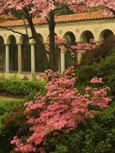 Franciscan Monastery with Pink Dogwood and Azaleas, Washington DC, USA by Corey Hilz