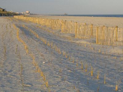 Grasses and Fences on Beach, Folly Island, Charleston, South Carolina, USA