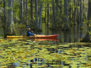 Man Kayaking, Cypress Gardens, Moncks Corner, South Carolina, USA by Corey Hilz