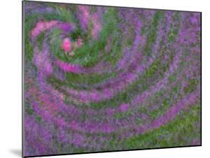 Multiple Exposure Swirl of Purple Petunias, Arlington, Virginia, USA by Corey Hilz
