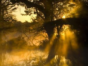 Shafts of Sunlight, Magnolia Plantation, Charleston, South Carolina, USA by Corey Hilz