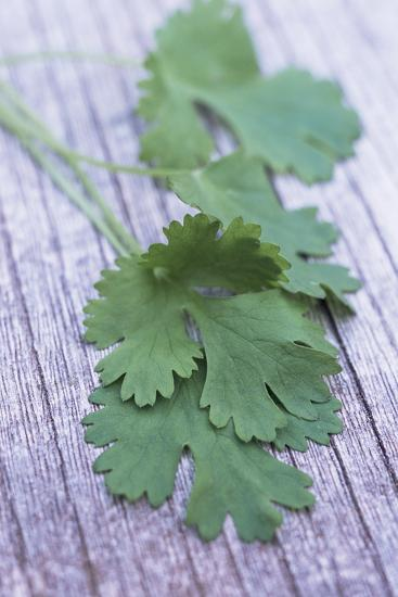 Coriander Leaves-Maxine Adcock-Photographic Print