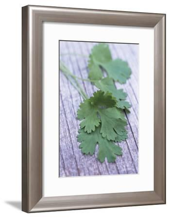 Coriander Leaves-Maxine Adcock-Framed Photographic Print