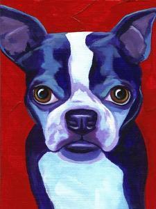 Boston Terrier by Corina St. Martin