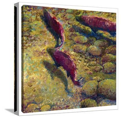 Cork Creek-Iris Scott-Gallery Wrapped Canvas