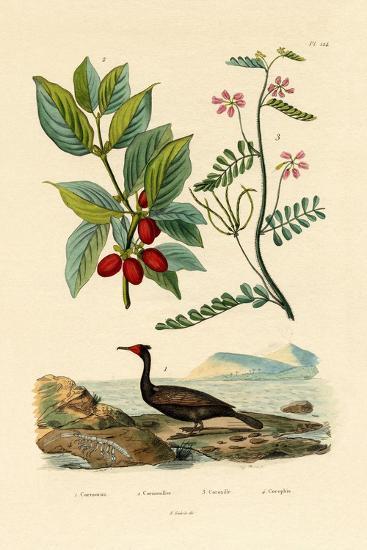 Cormorant, 1833-39--Giclee Print
