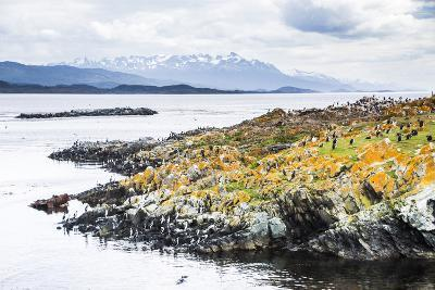 Cormorant Colony on an Island at Ushuaia in the Beagle Channel (Beagle Strait), Argentina-Matthew Williams-Ellis-Photographic Print