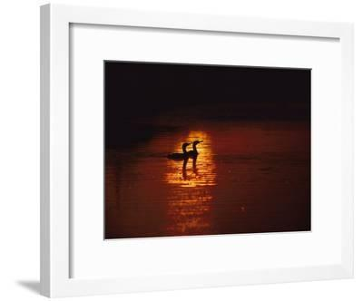 Cormorants Silhouetted in Suns Reflection on the Chesapeake Bay-Medford Taylor-Framed Photographic Print