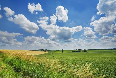 Corn Field and Cumulonimbus Clouds-Frank Krahmer-Photographic Print