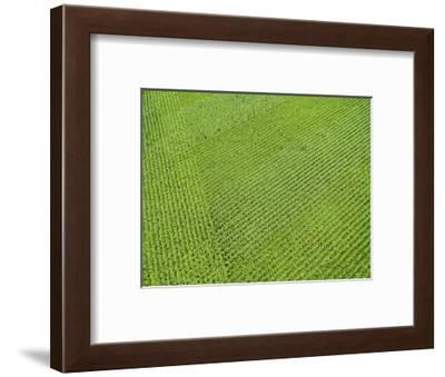 Corn field, Marion County, Illinois-Richard & Susan Day-Framed Photographic Print