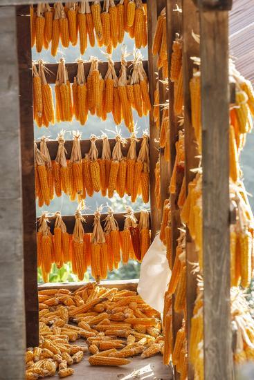 Corn Hung to Dry, Rize, Black Sea Region of Turkey-Ali Kabas-Photographic Print