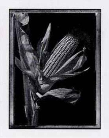 https://imgc.artprintimages.com/img/print/corn_u-l-esei40.jpg?p=0