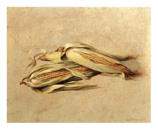 Corn-Joaquin Moragues-Art Print