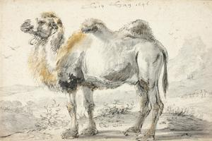 A Camel by Cornelis Saftleven