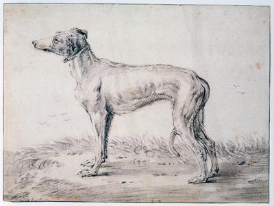 Greyhound, 1644