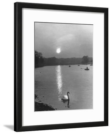 Swan on the Serpentine During the Mmonlight