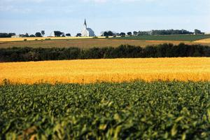 Cornfield with Church in Background
