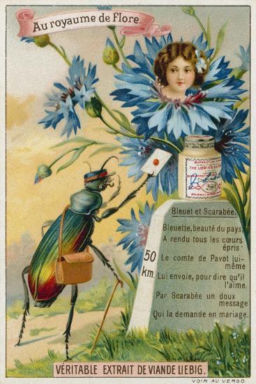 Cornflower and Beetle--Giclee Print