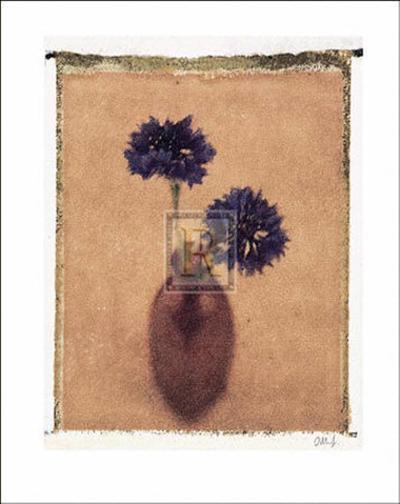 Cornflowers-Scott Morrish-Art Print