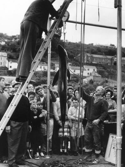 Cornish Shark Catch--Photographic Print