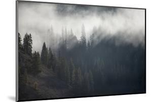 A Forest in Montana by Cory Richards
