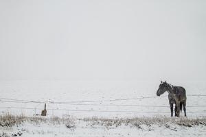 A Horse on a Ranch in Montana by Cory Richards