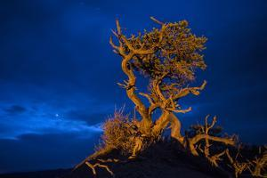 A Petrified Tree in Utah's Badlands by Cory Richards