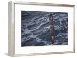 A Sea Gull Flies Alongside a Boat En Route to Franz Josef Land by Cory Richards