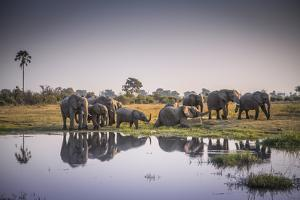 African Elephants at the Water's Edge in Botswana's Moremi Game Reserve by Cory Richards
