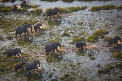 African Elephants Crossing Water in Botswana's Okavango Delta by Cory Richards