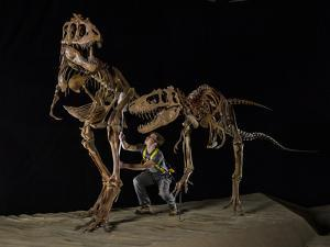 An Adult and a Juvenile Teratophoneus Get a Dusting at the Natural History Museum of Utah by Cory Richards