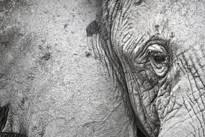 Close Up Portrait of an African Elephant by Cory Richards